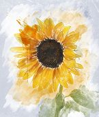 Watercolor Digital Painting Of  Sunflower