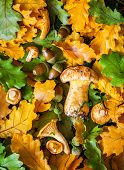 Autumn background with mushrooms,oak leaves and acorns