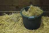 Bucket of feed