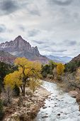 Постер, плакат: The Watchman In Zion Np