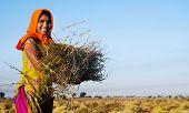 Indian girl working on the farm. near Jaipur, India.