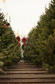 Christmas Tree row