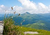 Grass on mountain meadow on Carpathians background, Ukraine