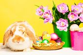 Cute small rabbit with flowers and Eastern eggs