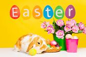 Cute rabbit and word Easter on yellow background