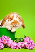 Close up view of cute rabbit on green background