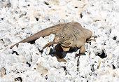 Wild iguana. On east calendar 2012 - year of a dragon.