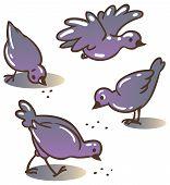 Pigeons Peck Feed