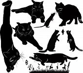 foto of animal silhouette  - collection pet animal cat  black silhouette vector - JPG