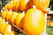 Market pumpkins.