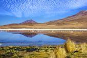 Laguna Flamingo Bolivia