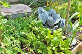 Organic Vegetables In Patch