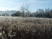 stock photo of bohemia  - plants covered with frost southern Bohemia  - JPG