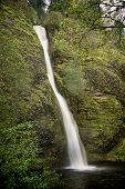 foto of horsetail  - Horsetail Falls one of the many fall along the Columbia River Gorge Oregon - JPG