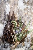 Sprigs Of Rosemary