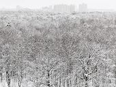 Above View Of Snow Forest And Urban Buildings