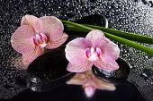 Orchids And Black Stones With Reflection