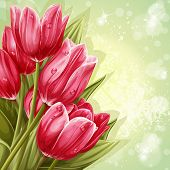bouquet of pink tulips for your text