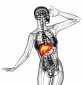 3D Render Medical Illustration Of The Human Liver