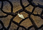 stock photo of drought  - fish died on crack ground due to drought and river dried up - JPG