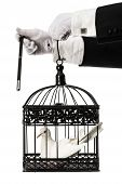 image of caged  - Magician trick with a dove inside cage - JPG