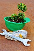 pic of environmentally friendly  - Green plant in green helmet on rusty background  - JPG