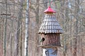 pic of tit  - Tit near the bird feeder in the spring park - JPG