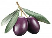 foto of kalamata olives  - Kalamata olives with leaves on a white background - JPG