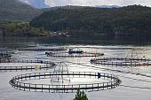 Fishfarm
