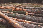foto of deforestation  - Environment nature and deforestation forest concept  - JPG