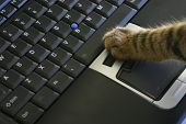 Cat Clicking Laptop Mouse poster