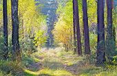 Walk routes are hidden in forests full of autumn sunshine.