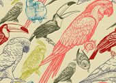 Tropical Birds. Parrots And Toucans. Seamless Vector Background. Wildlife Pattern. Retro Vintage. Ol poster