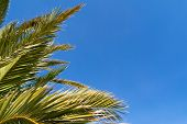 Exotic Tropical Palm Tree Leaves And Bright Blue Sky Background. Photo At Sunny Summer Day At The Be poster