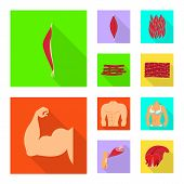 Isolated Object Of Muscle And Cells Sign. Set Of Muscle And Anatomy Stock Symbol For Web. poster