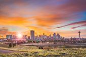 Denver, Colorado, USA downtown city skyline at dawn. poster