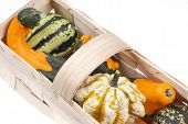 picture of gleaning  - beautiful decorative pumpkins  - JPG