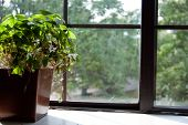 An Oxalis Plant, Growing In A Copper Pot, Sits On A Windowsill In Summertime. poster