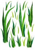 Hand Drawn Watercolor Grass Set Isolated On White Background. Sketch Green-fodder. Green Grass Patte poster