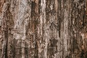 Dark Brown Dirty Shabby Tree Bark. Old Wood Brown Oak Pattern Background Texture. Brown Dark Tree Cr poster