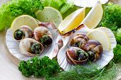 picture of escargot  - Escargots de Bourgogne  - JPG