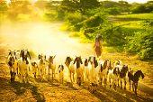 Lifestyle of Burmese in Bagan , Myanmar