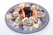 stock photo of whelk  - seafood platter - JPG