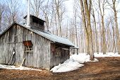 foto of sugar industry  - beautiful and aged sugar shack during spring season in Quebec Canada - JPG