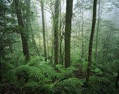 Australia trees in rainforest