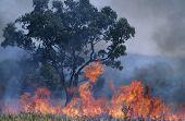 Australien-Bush-Feuer