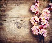 stock photo of tree-flower  - Spring Blossom over wood background - JPG