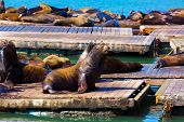 San Francisco Pier 39 lighthouse and seals at California USA
