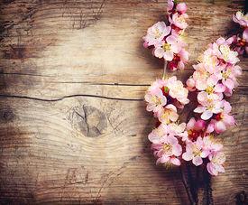 picture of garden-art  - Spring Blossom over wood background - JPG