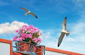 Flowers And Seagulls